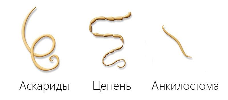 Первые признаки глистов в организме детей и взрослых
