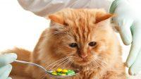 Как дать коту таблетку от глистов?